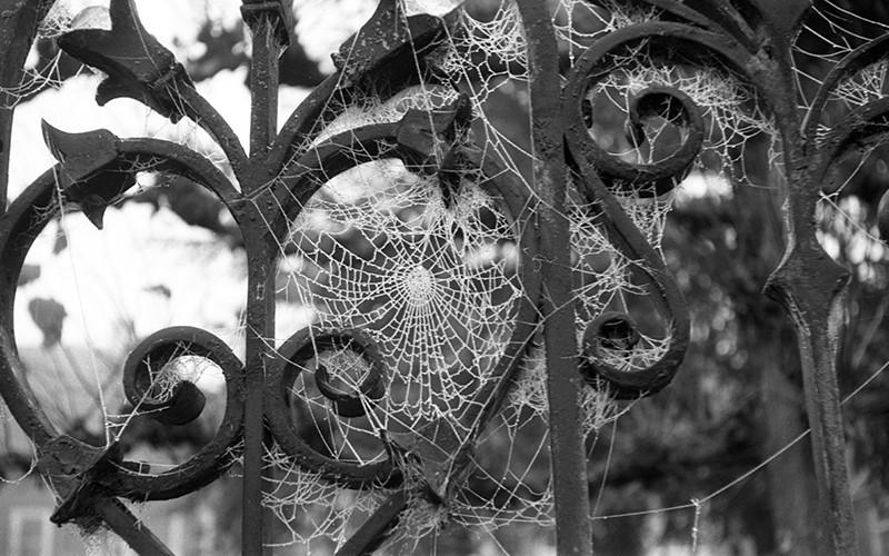 spiderwebs01.jpg