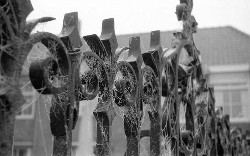 spiderwebs02.jpg