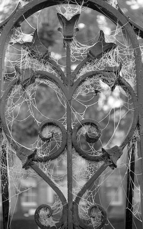 spiderwebs03.jpg