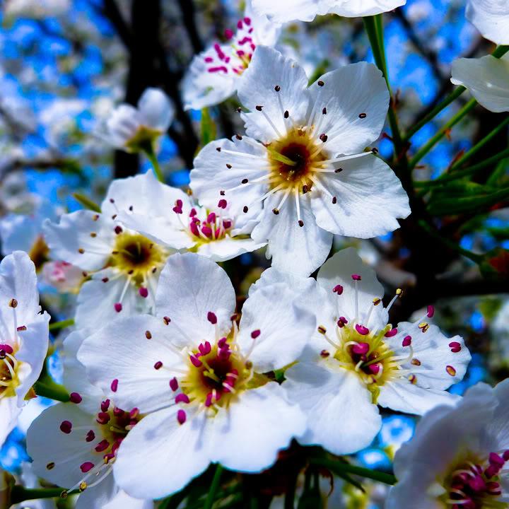 Spring-Blossoms-LR_web.jpg