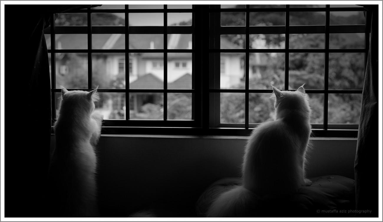 Stalkers.jpg