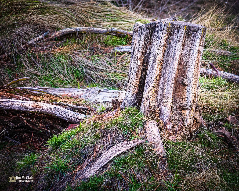 stump1412-03.jpg