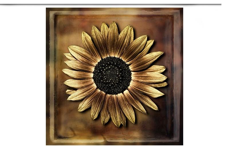 SunFlower_2-L.jpg