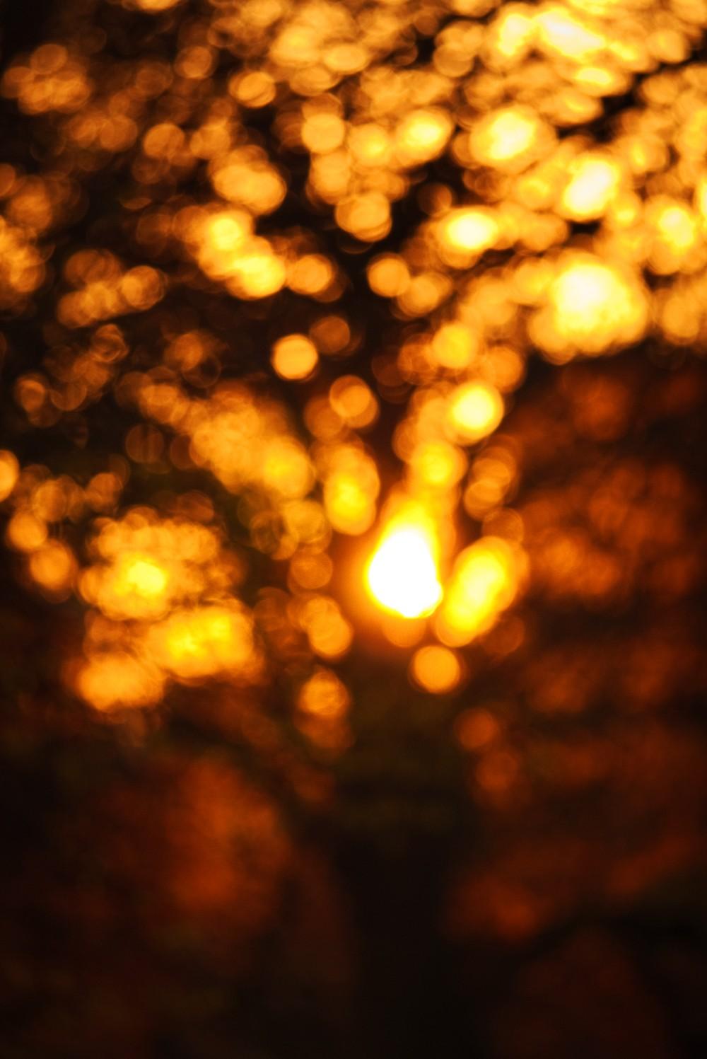 SunriseTree.jpg