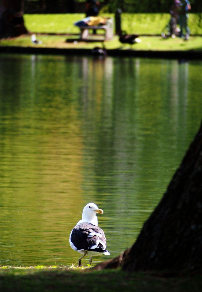 suspicious-seagull.jpg