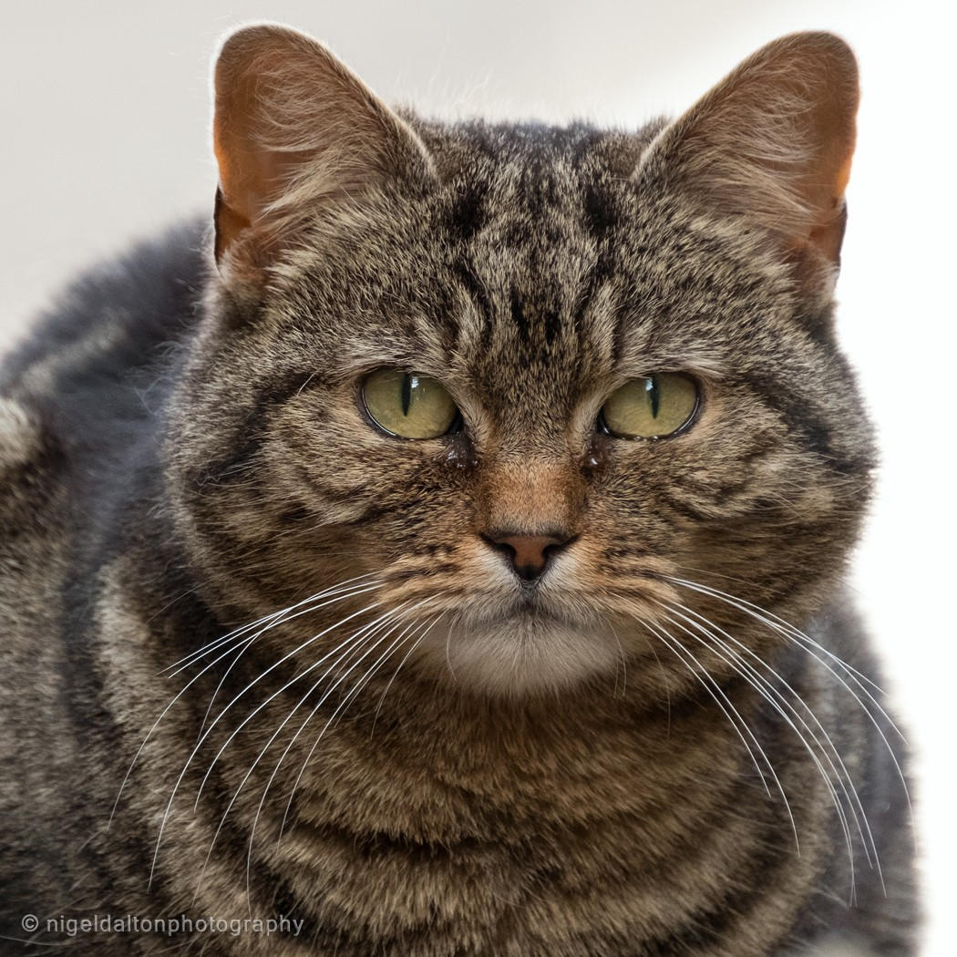 The Cat Watermarked.jpg