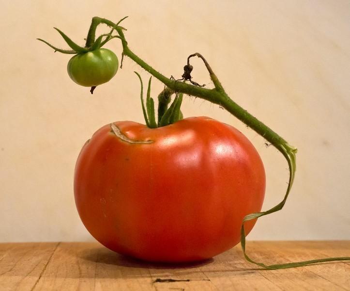 tomato-L.jpg