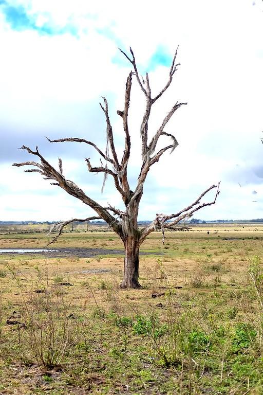 Tree%203-XL.jpg