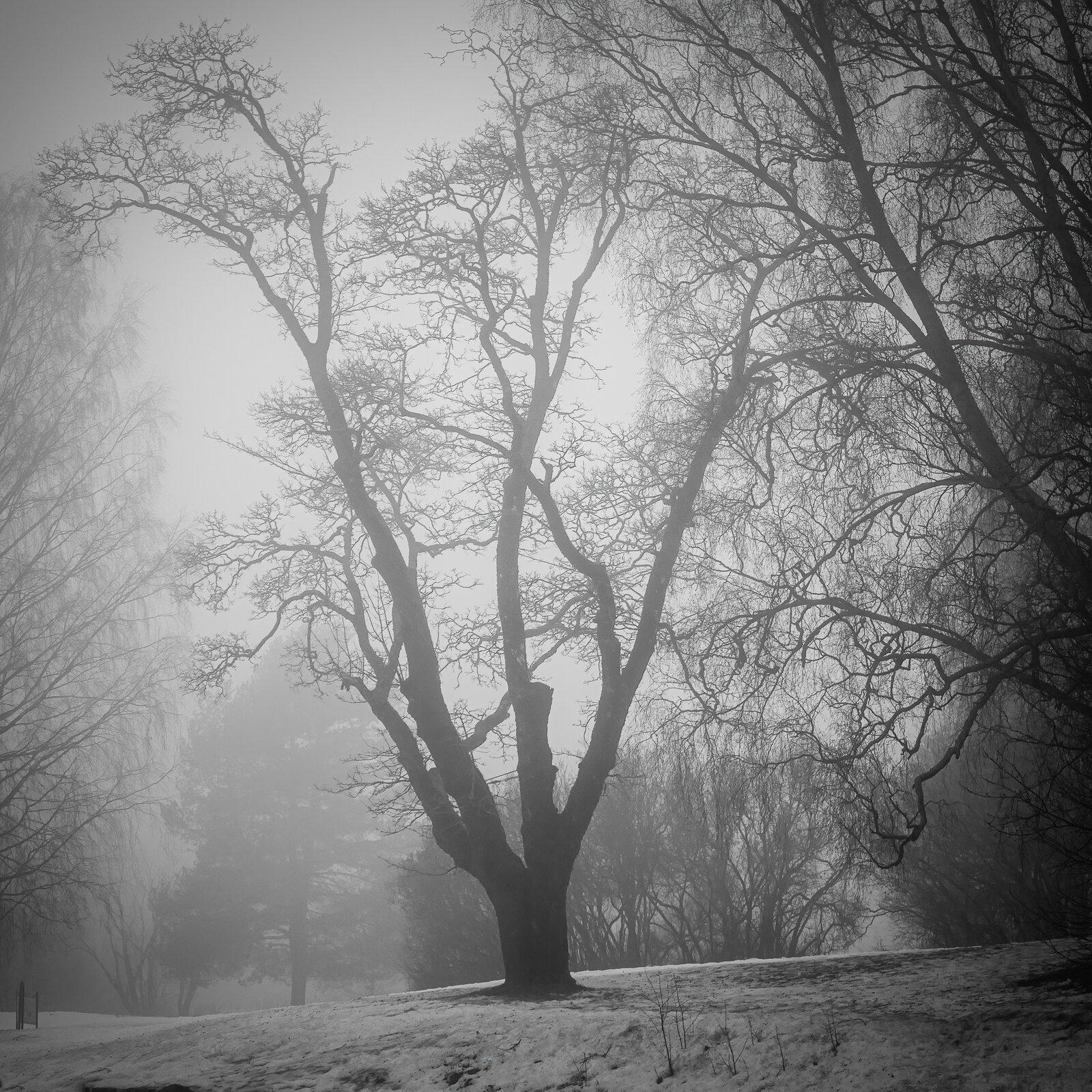 Tree fog.jpg