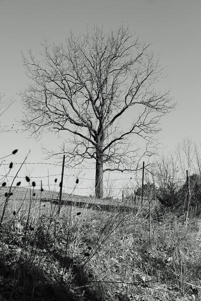 tree22-L.jpg
