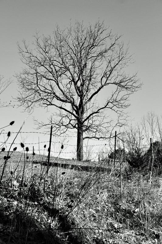 tree22s.jpg