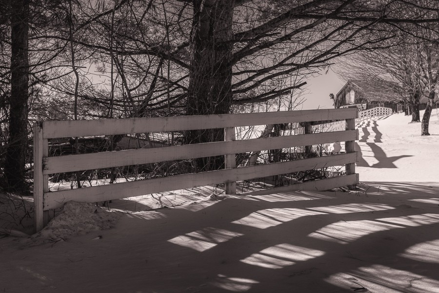 Trees and Fence - B+W.jpg