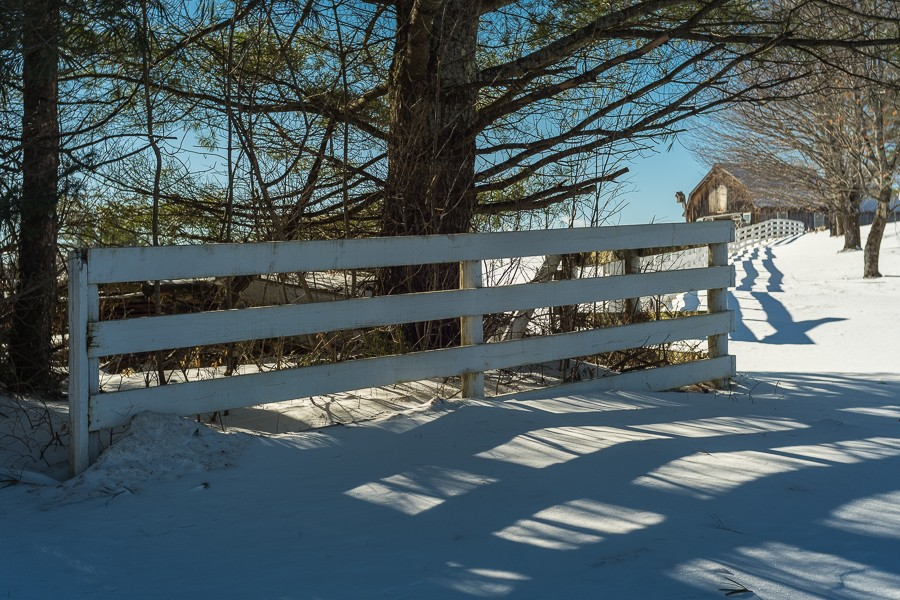 Trees and Fence - Color.jpg