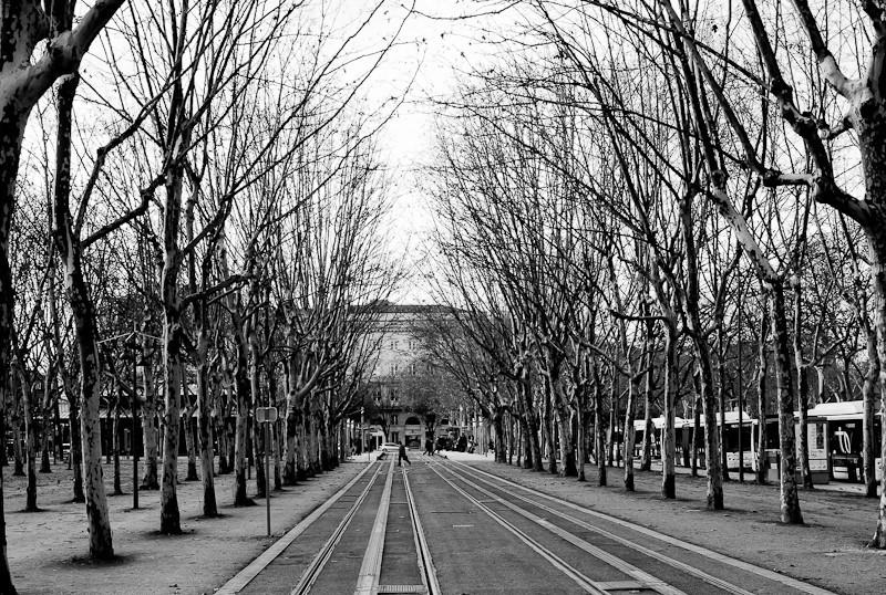 Trees_BDX.jpg