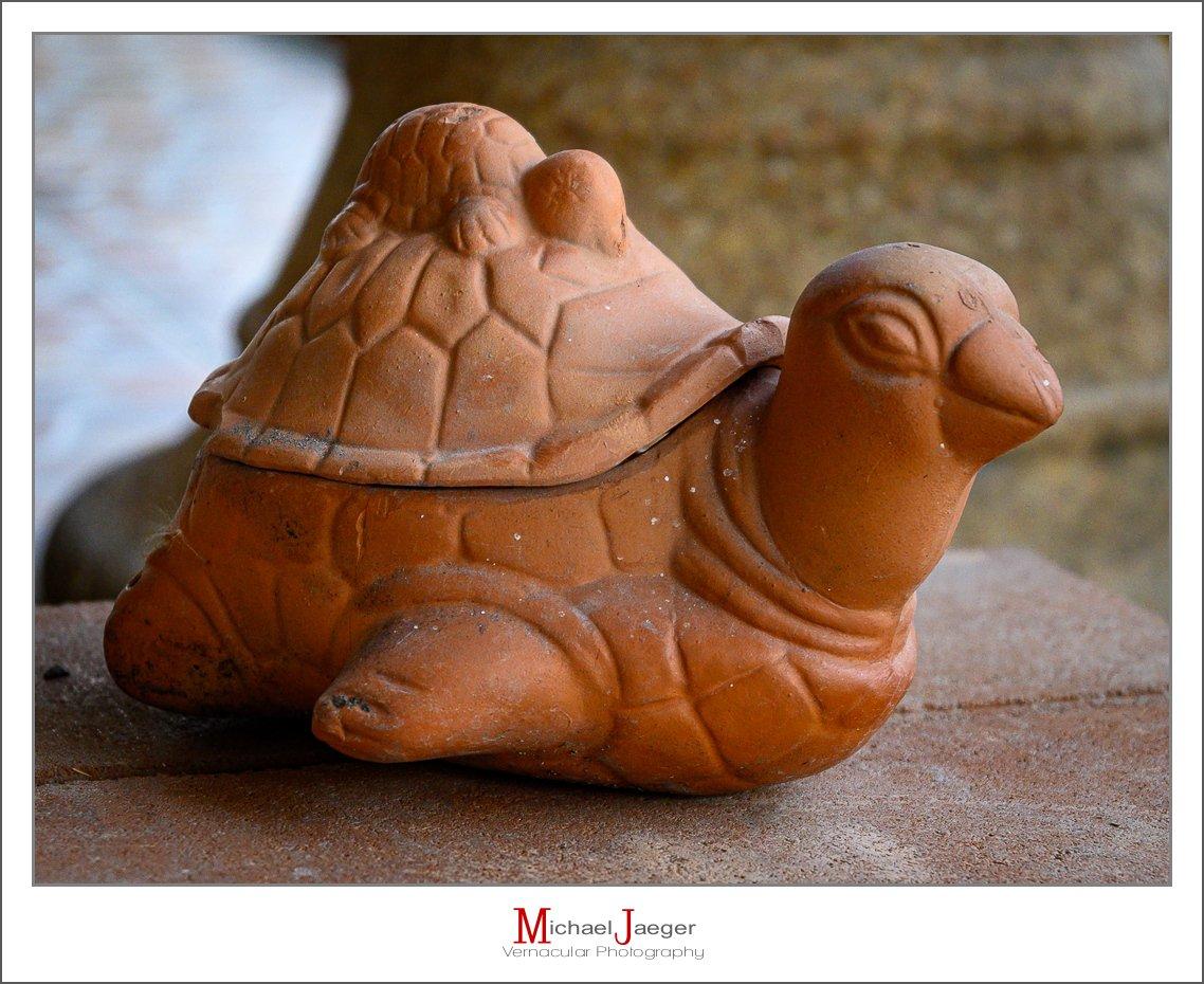 turtle-1-2.jpg