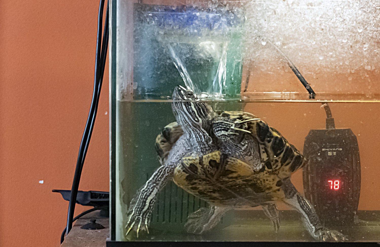 turtle of focus.jpg