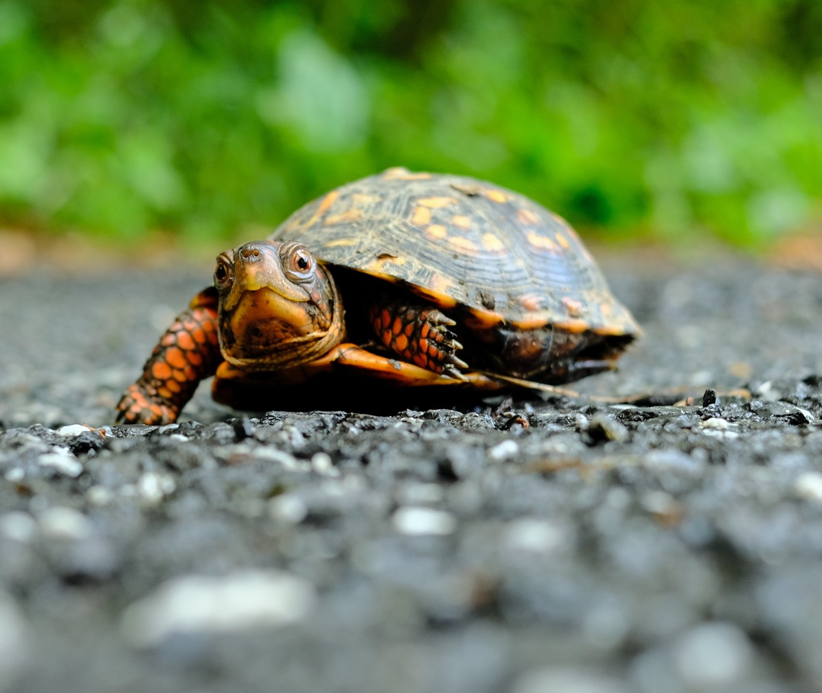 turtle_poorhouse.jpg