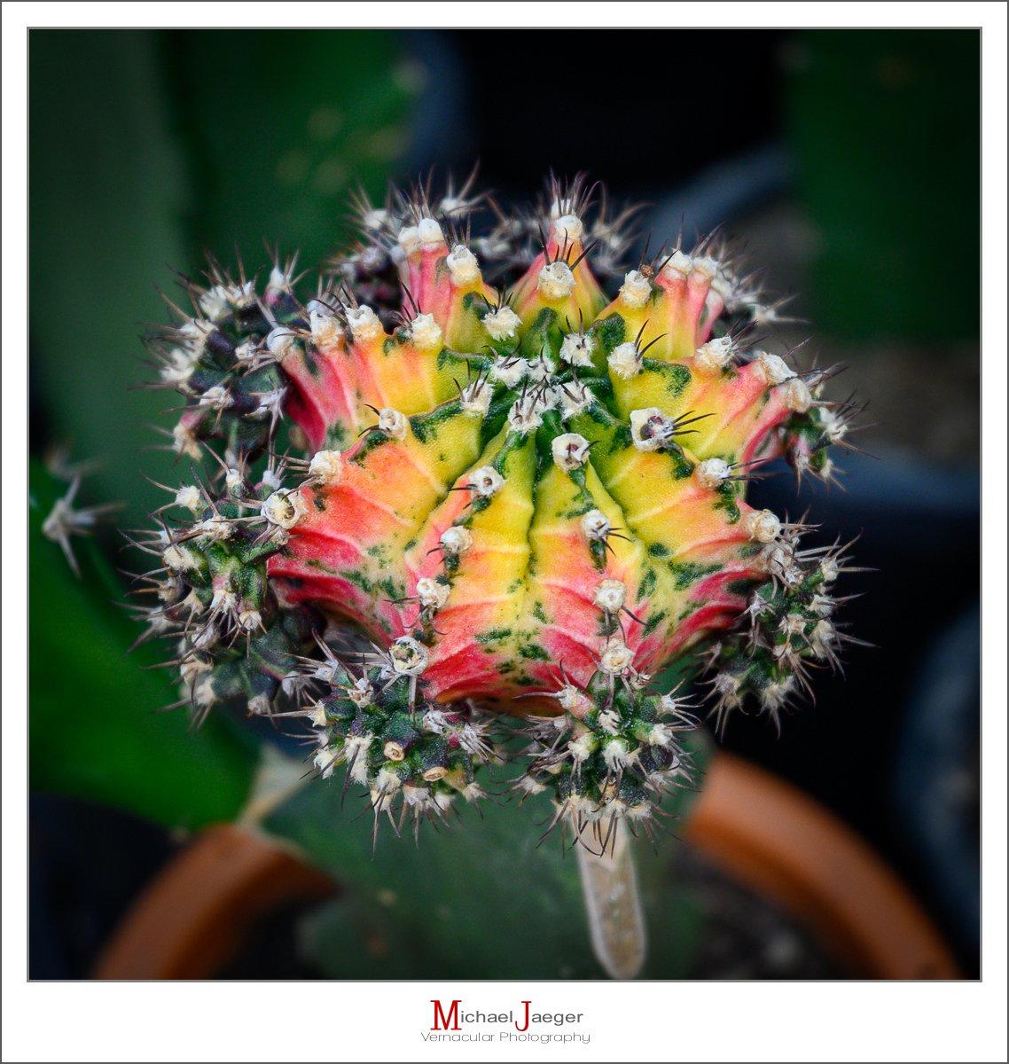 twp color cactus-1.jpg