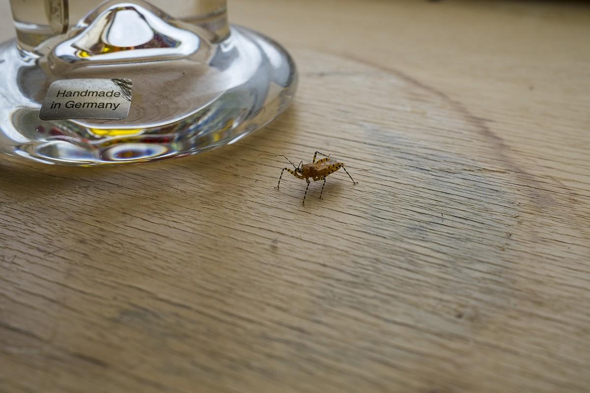 uncropbug.jpg