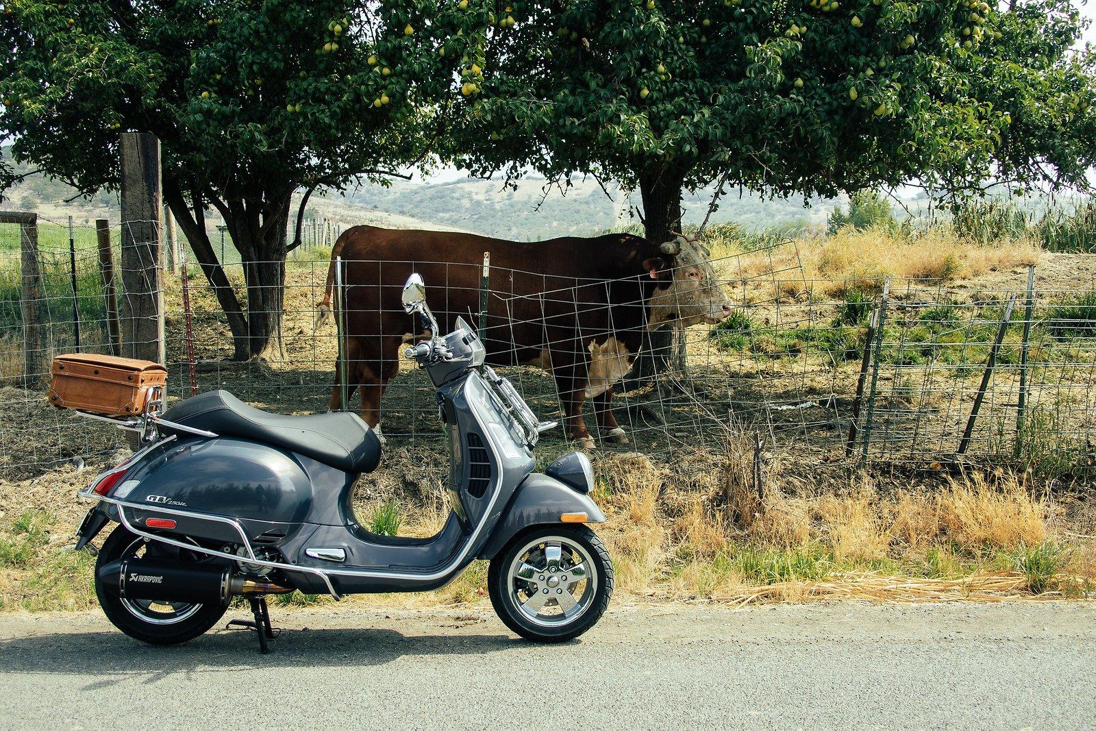 Vespa@Cow3-VSCO03FujiCP100c--.jpg