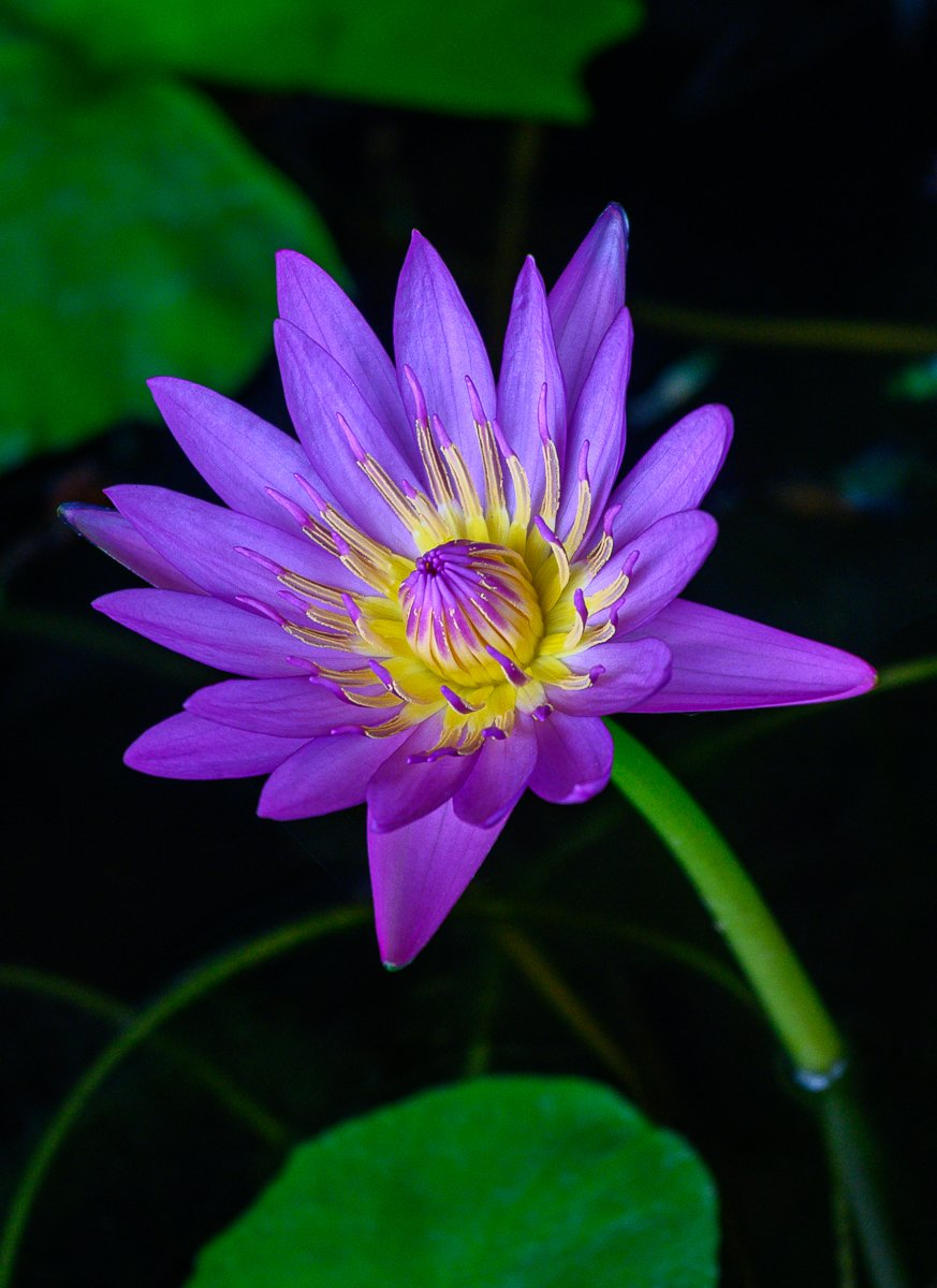 violet-1.jpg
