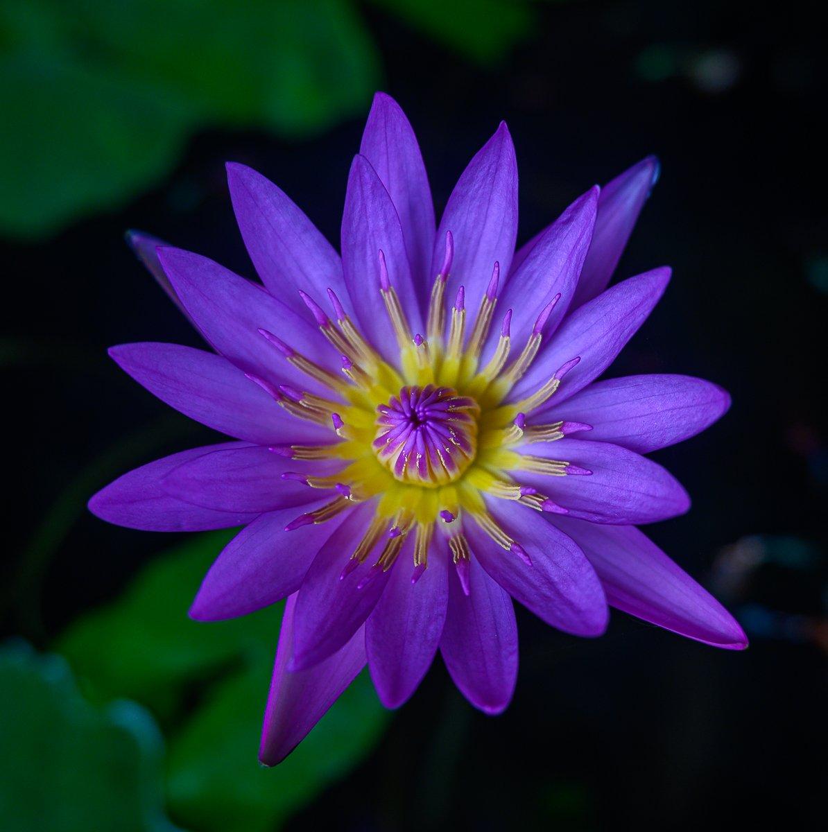 violet-3.jpg