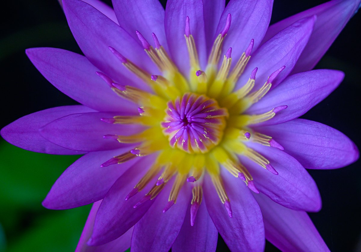 violet-4.jpg
