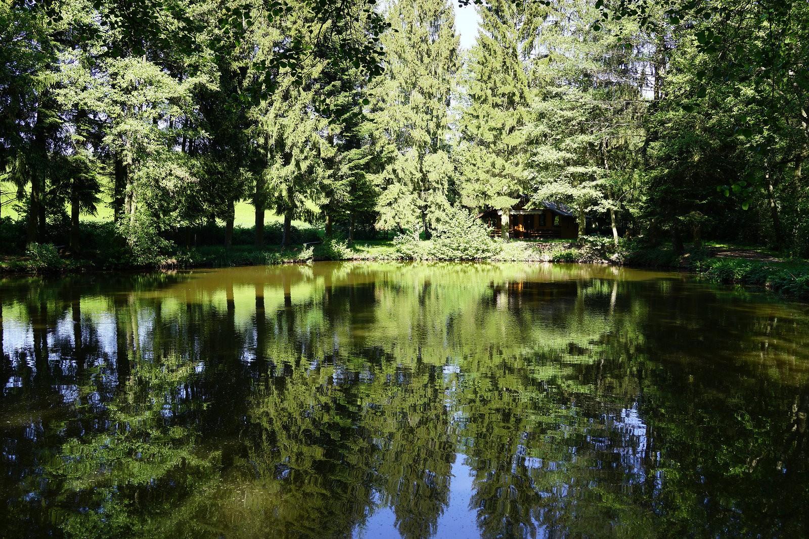 Waldsee.jpg