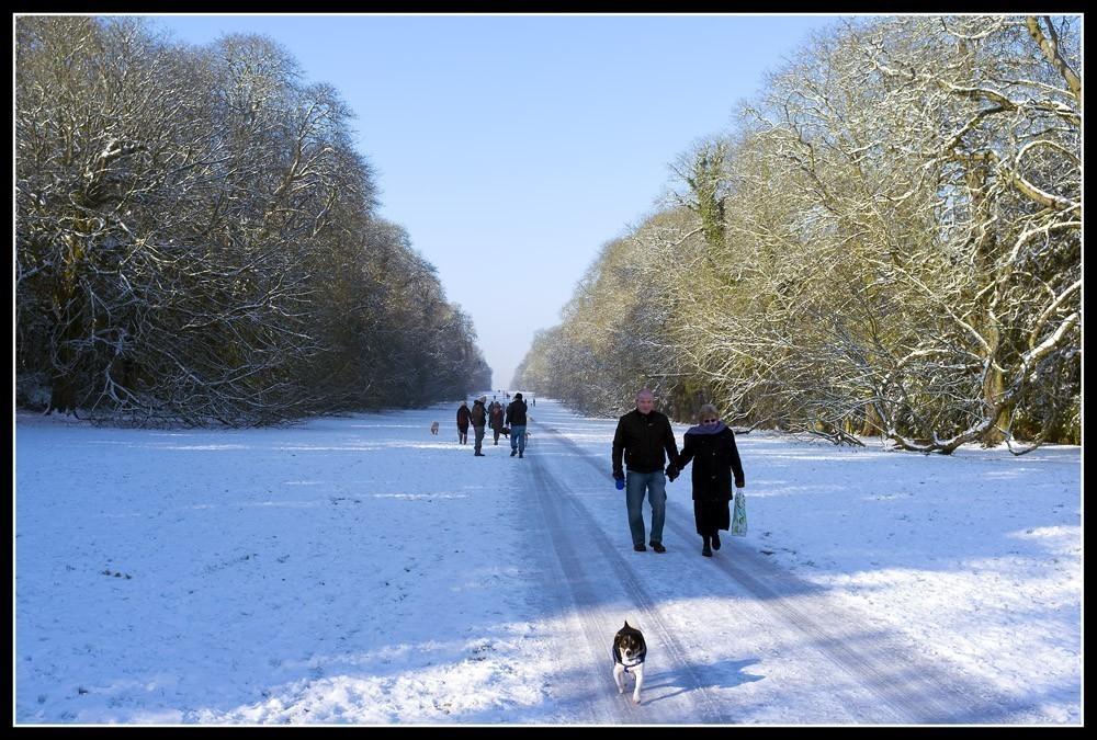 Walking_the_dog1.jpg