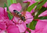 Wasp01_s.jpg