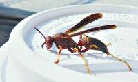 Wasp02_s.jpg