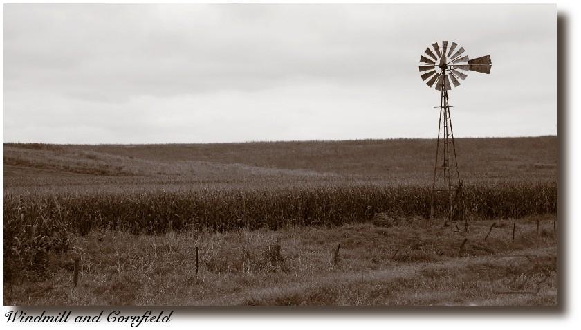 Windmill%20and%20Cornfield_7003%20post.jpg
