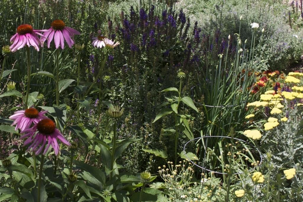 X1 garden jpeg 14.jpg