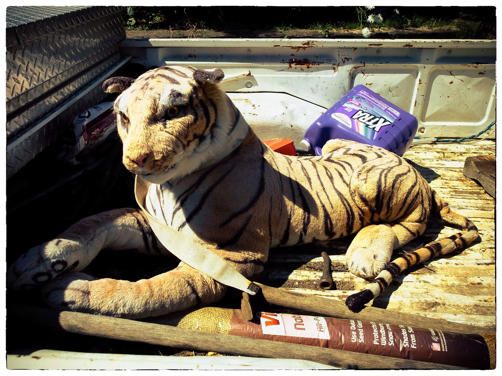 X30_July10_Pickup_Tiger(EkLomoWarm).jpg