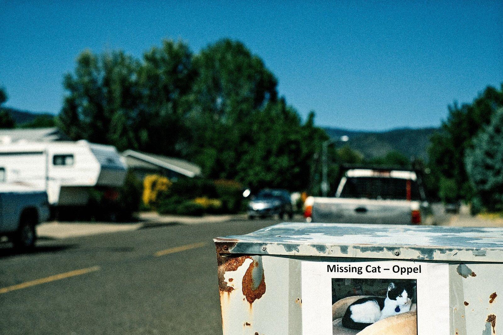 XPro3_July20_21_Missing-Cat_Oppel.jpg
