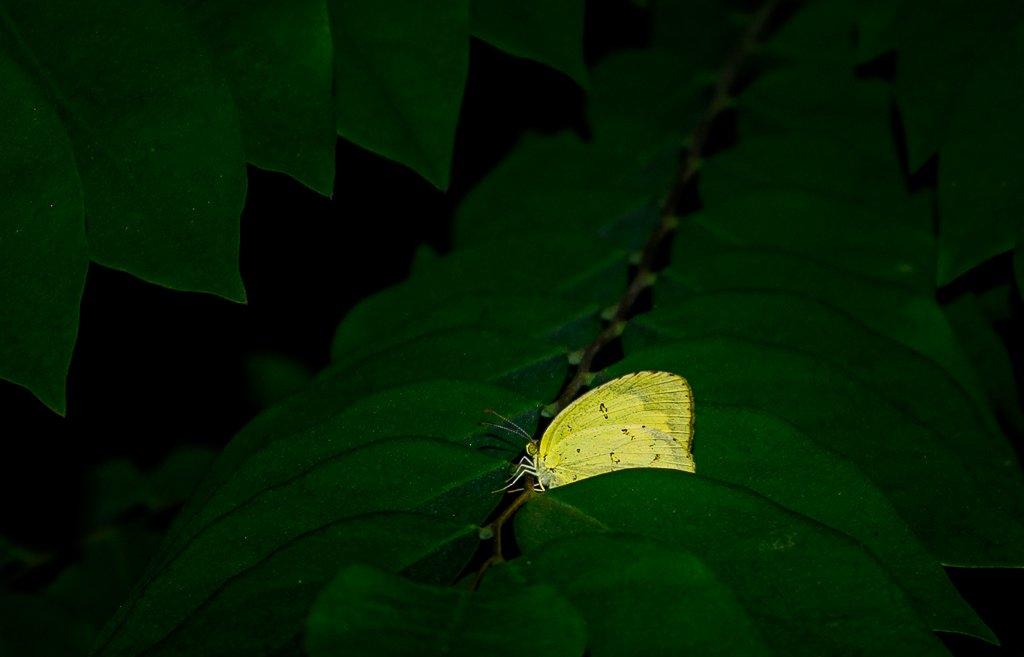 yellow-fal-1-2.jpg