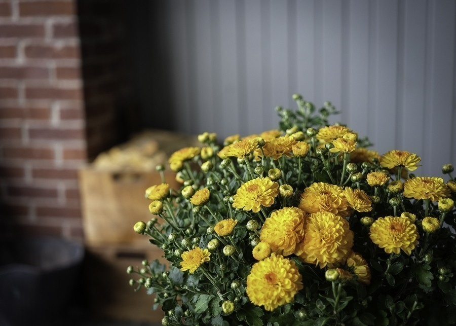 Yellow Flowers on Porch (1 of 1).jpg