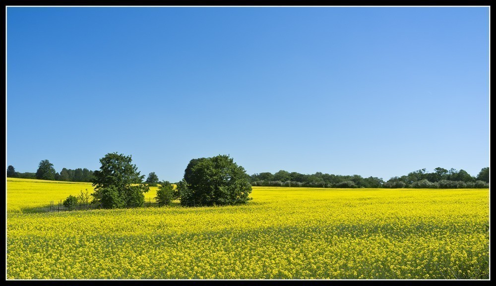 Yellow_green_blue.jpg