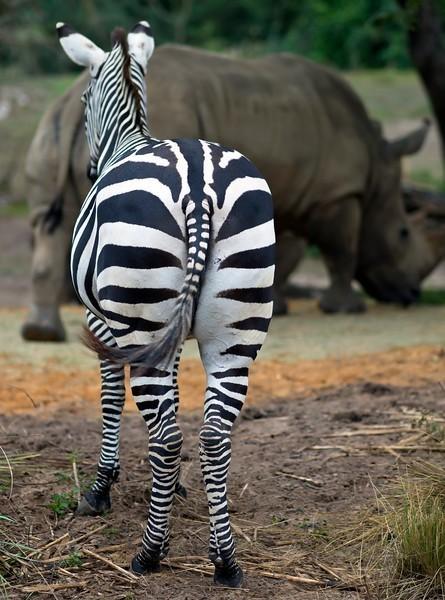 zebra%26rhino1-L.jpg