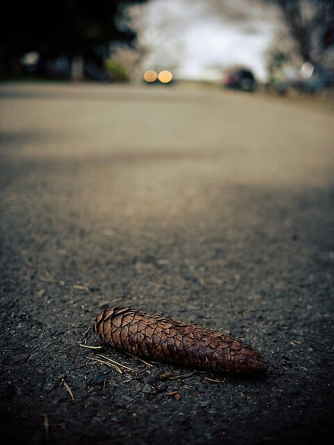 Around town ... (PART 2) - Moving inside city limits, the town still feels more like an old farming town and less like a modern suburb. There are a lot of trees, and many evergreens still shed their leaves, branches … and pine cones.   Pine Cone by MiguelATF, on ipernity  Some streets are unpaved; many feature vehicles...