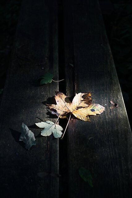 Signs of Fall. - M.