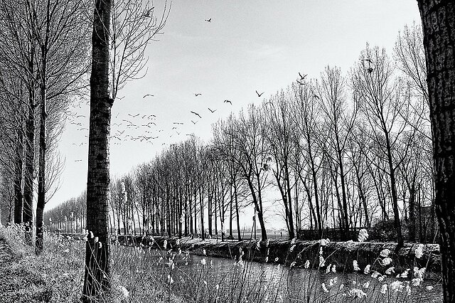 Landscapes in B&W - a set from Flanders,  common theme: canals