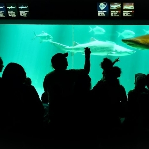 New York Aquarium