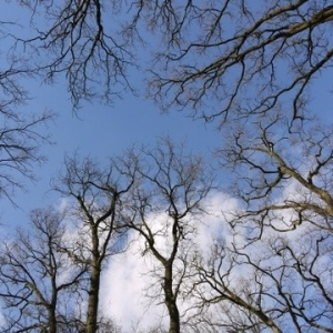trees in rge sky