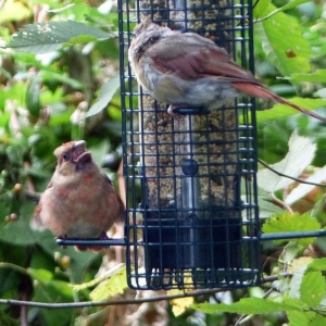 FZ200_Birdfeeder_lurker_005-001_Medium_