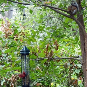 FZ200_Birdfeeder_lurker_009-001_Medium_