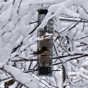 FZ200_birds_at_feeder_in_snowstorm_001_copy-001_Medium_
