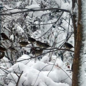 FZ200_birds_at_feeder_in_snowstorm_002-001_2_Medium_