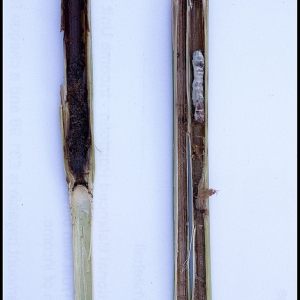 investigating reed quality