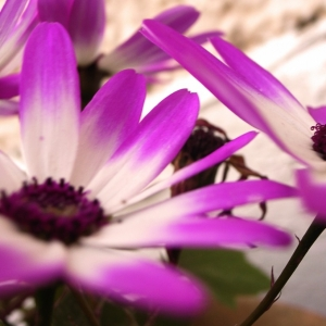purple_flowers